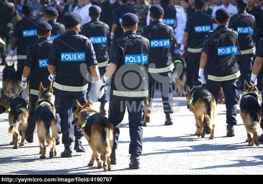 Police K9 Wallpaper Police canine k9 unit 512x359