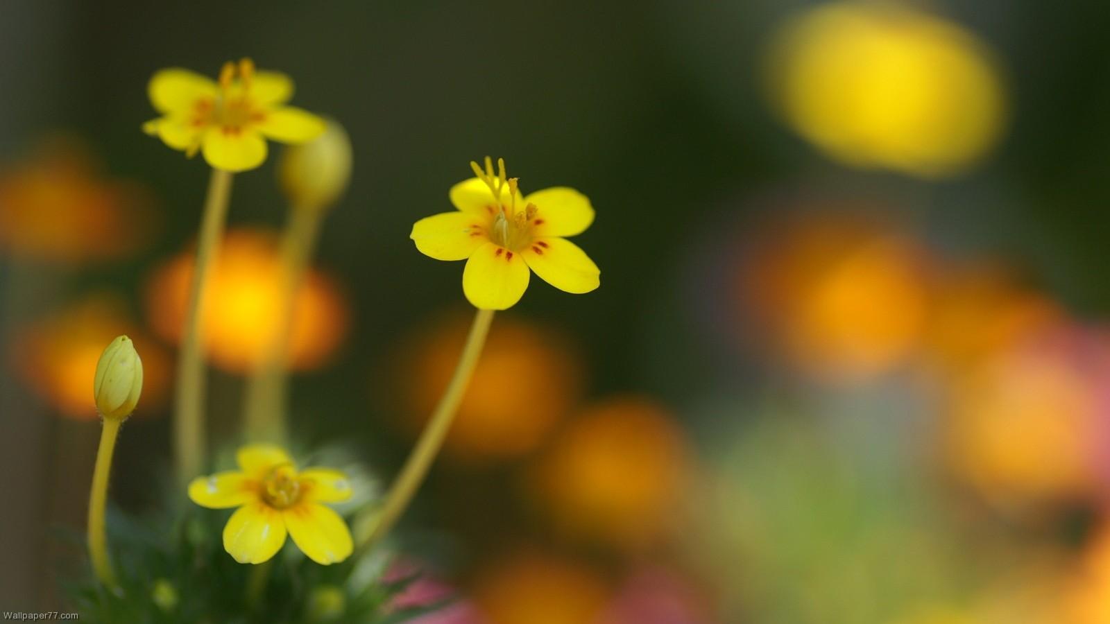 Small Flower Wallpaper WallpaperSafari