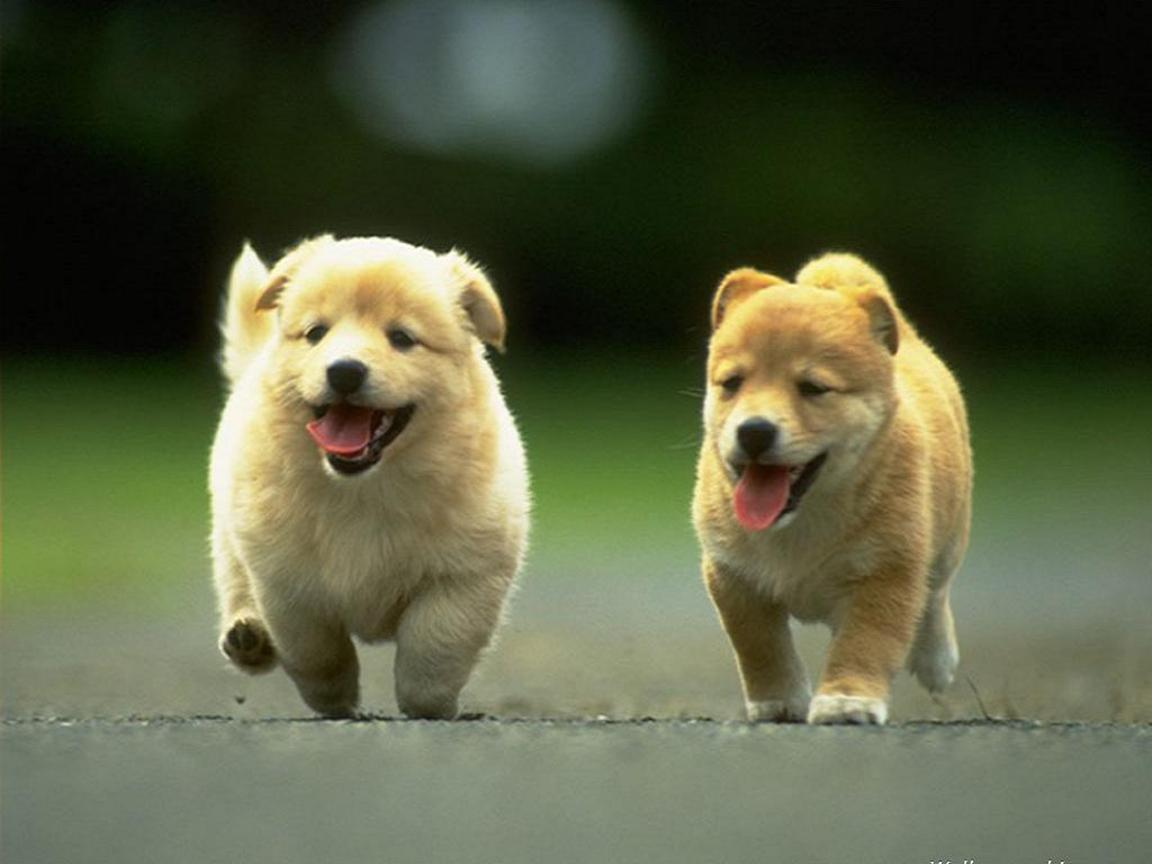 Animal Wallpapers   Dogs   Cute puppies 1152x864