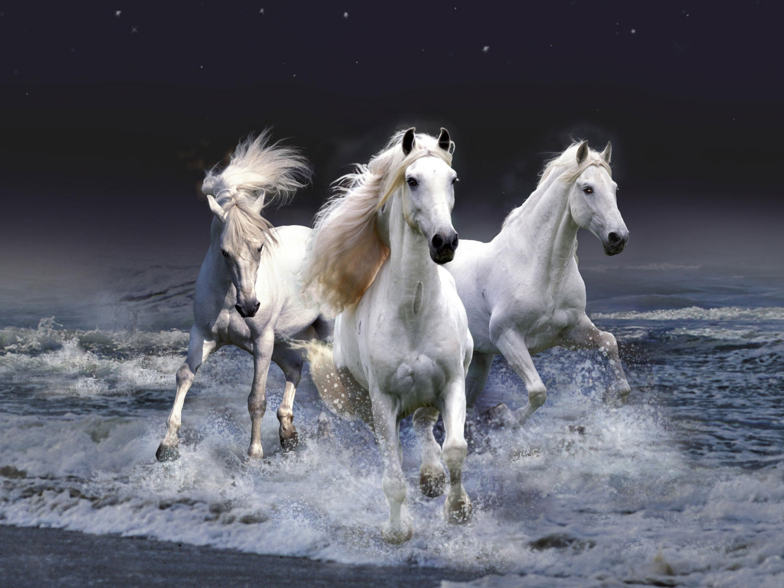 Beautiful Wallpapers wild horses wallpapers 1600x1200
