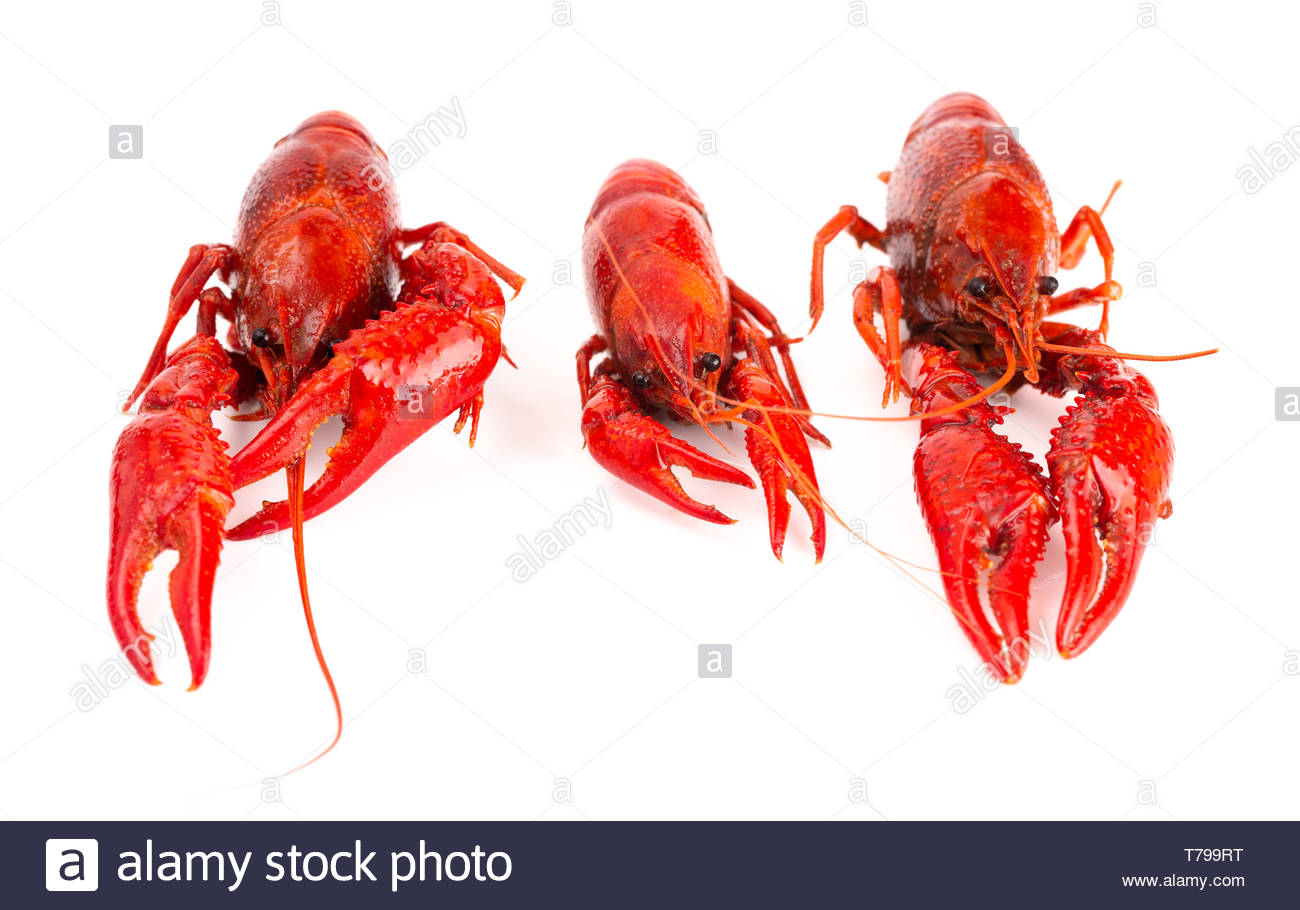 Cooked Red Crawfish Isolated on a White Background Stock Photo 1300x910
