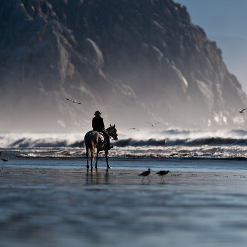 1920x1080 Riding The Horse On The Shore Wallpaper 500x500