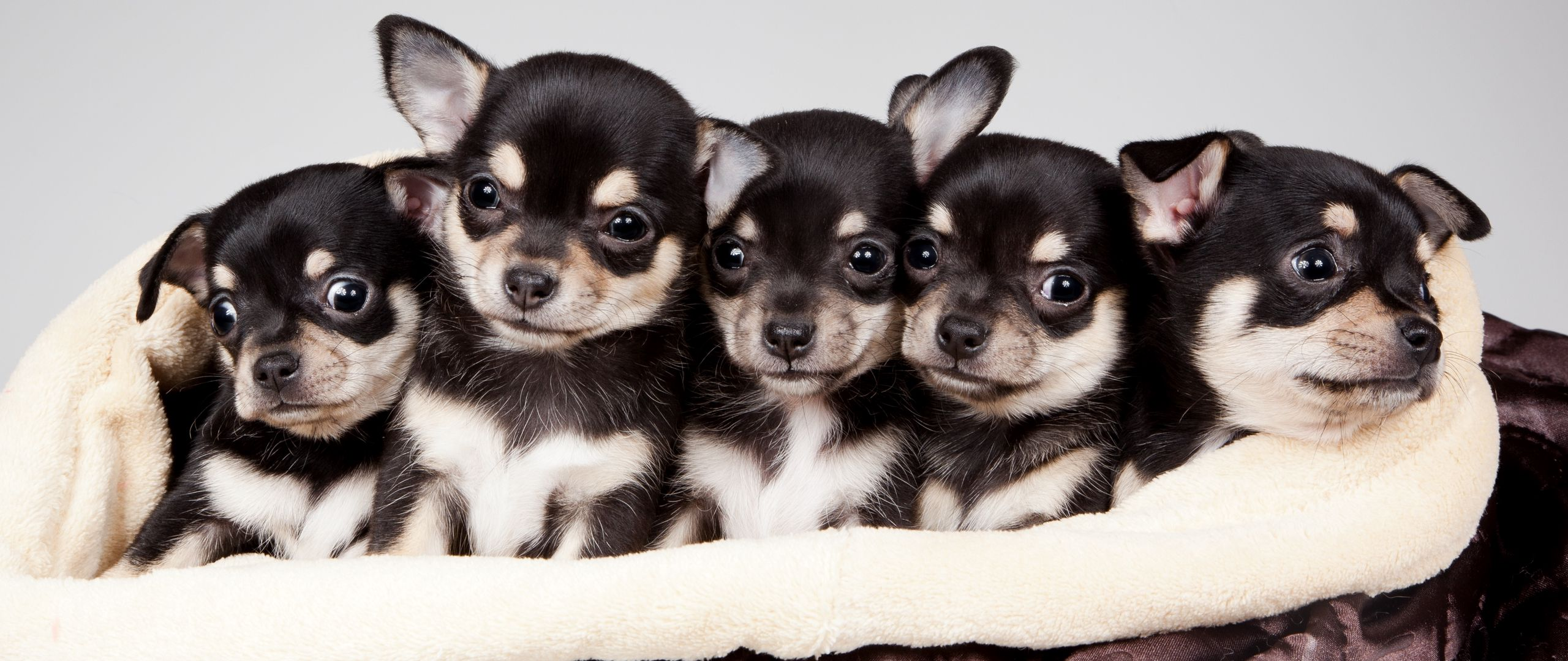 Download wallpaper 2560x1080 national puppy day 2015 celebrity 2560x1080