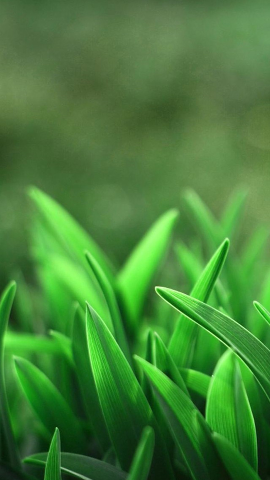 Free Download Green Wallpapers For Samsung Galaxy S5 89