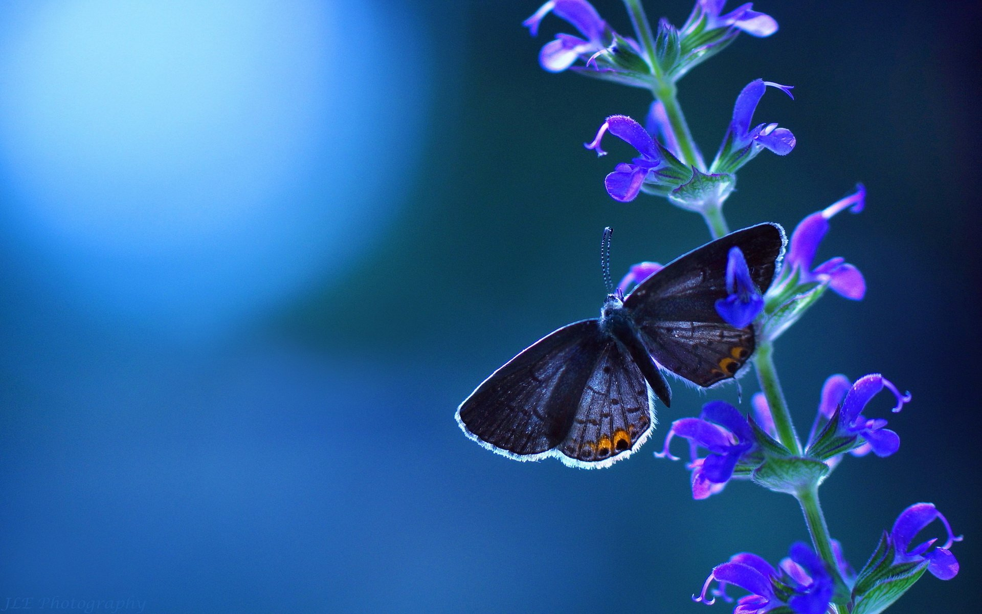 Butterfly HD Wallpaper Background Image 1920x1200 ID553073 1920x1200