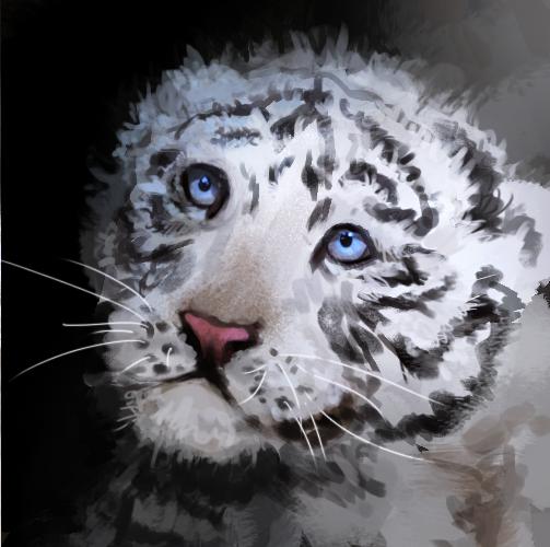 White Tiger Cubs Wallpaper Cute White tiger cub by llrobinll 503x500