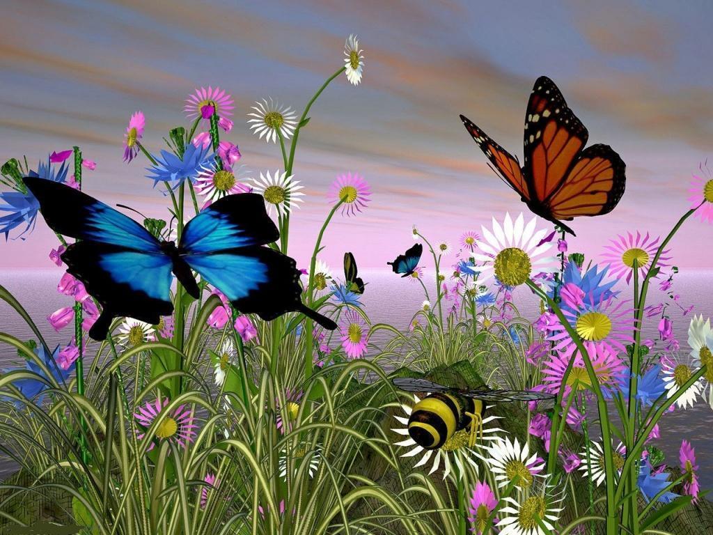 butterfly wallpaper   yorkshire rose Wallpaper 21172143 1024x768