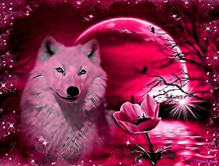 really cool wolf wallpapers - photo #22