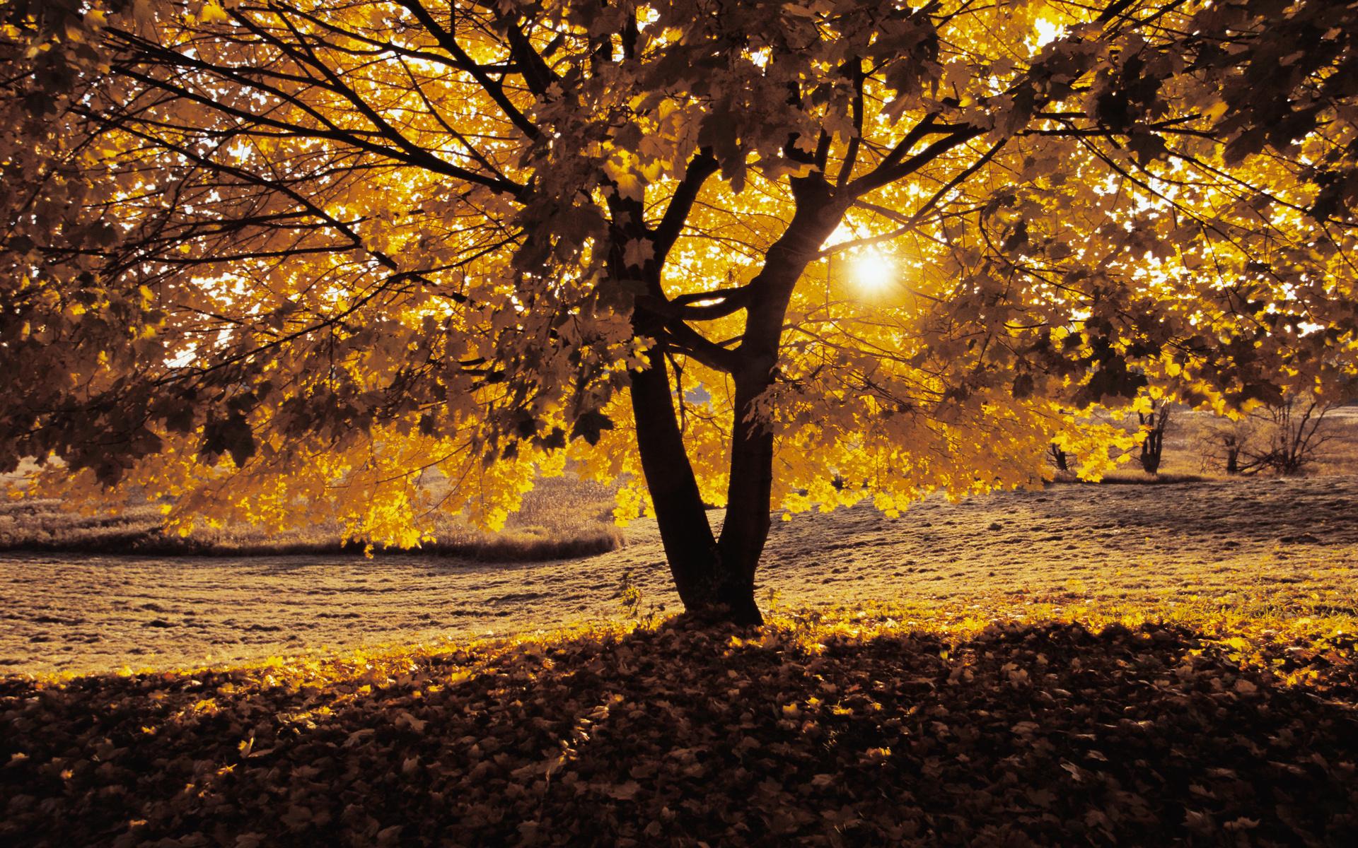Oak Trees 32978 1920x1200 px HDWallSourcecom 1920x1200