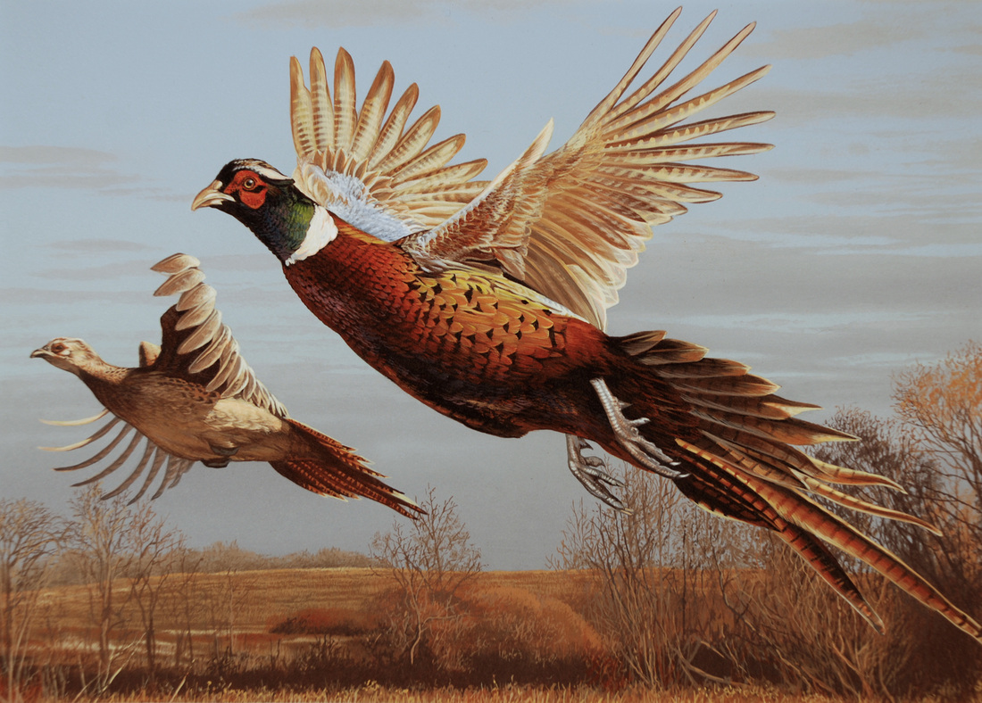 pheasant hunting pictures - HD 1100×788