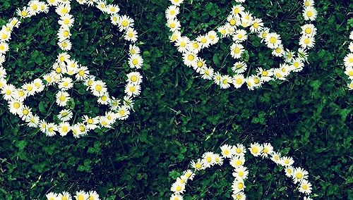 daisiespicturestumblr Daisies Background Tumblr Daisy tumblr 500x284