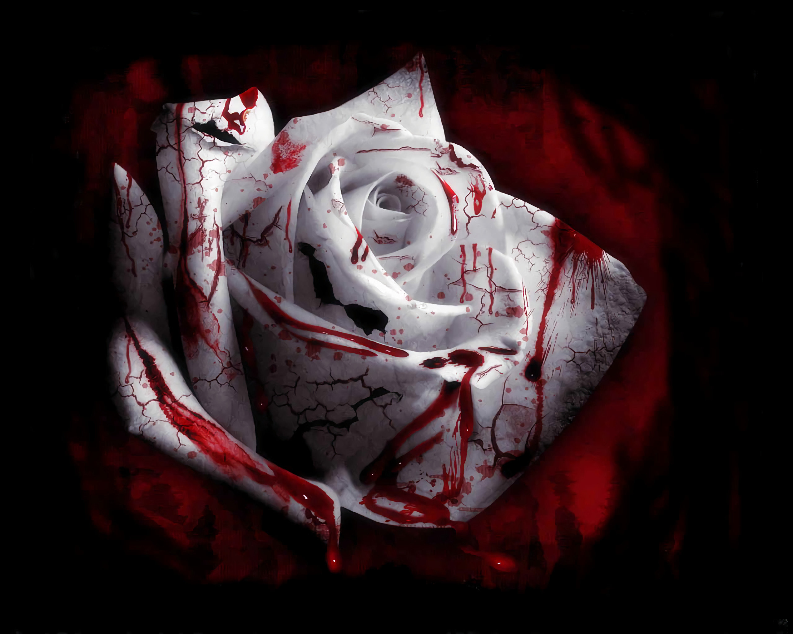 Blood wallpapers HD for desktop backgrounds 2560x2048