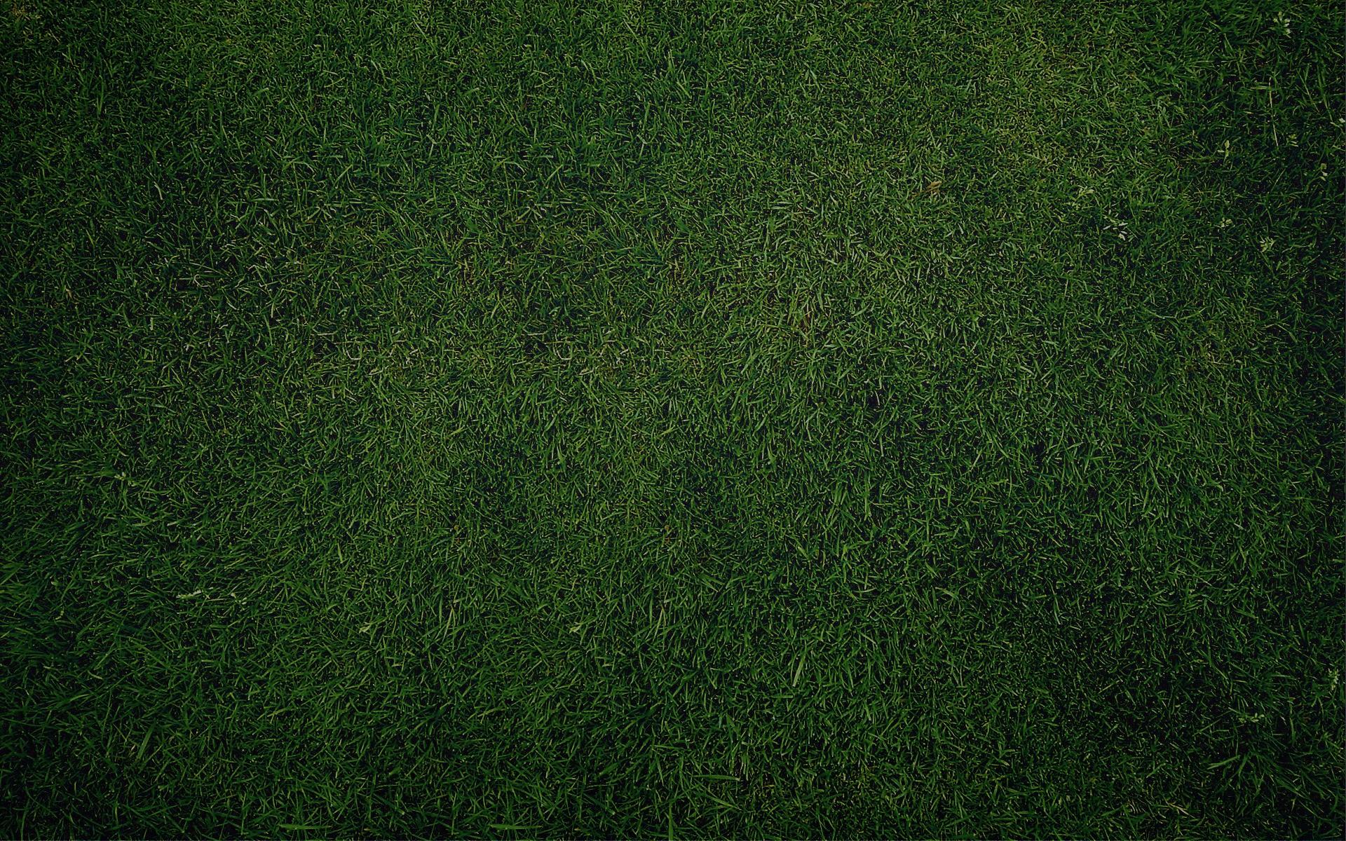 Green wallpaper   750549 1920x1200