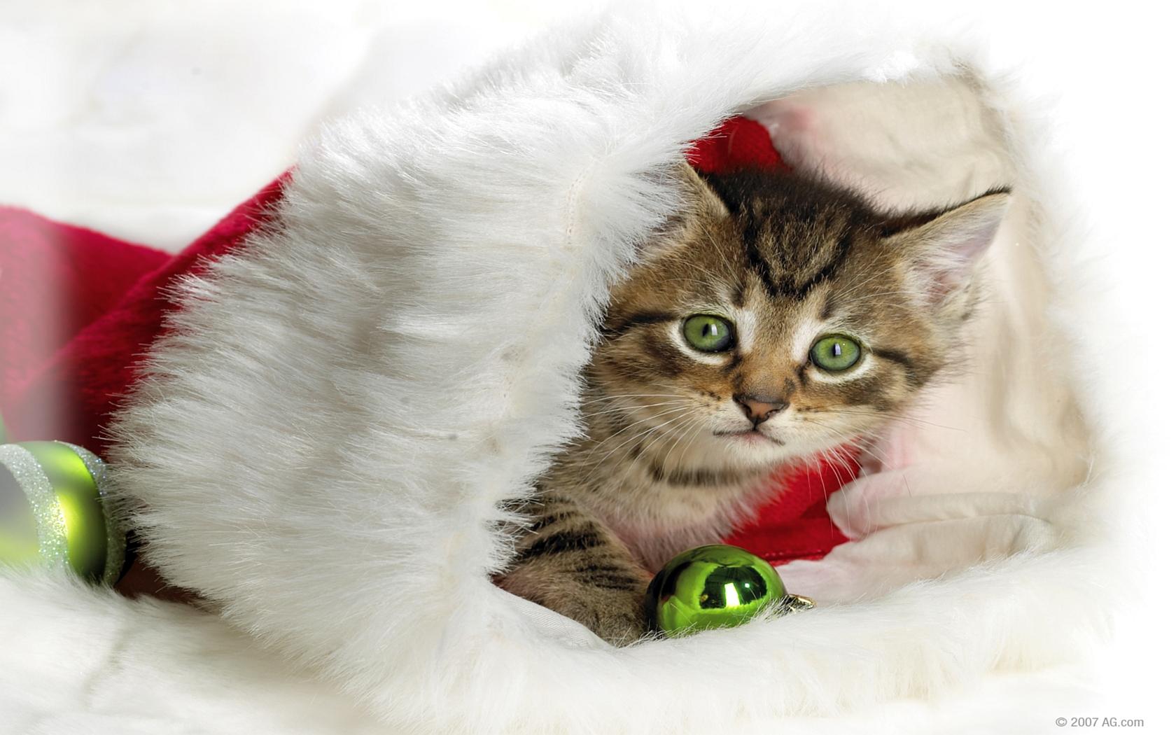 Christmas Animal Wallpaper For Desktop