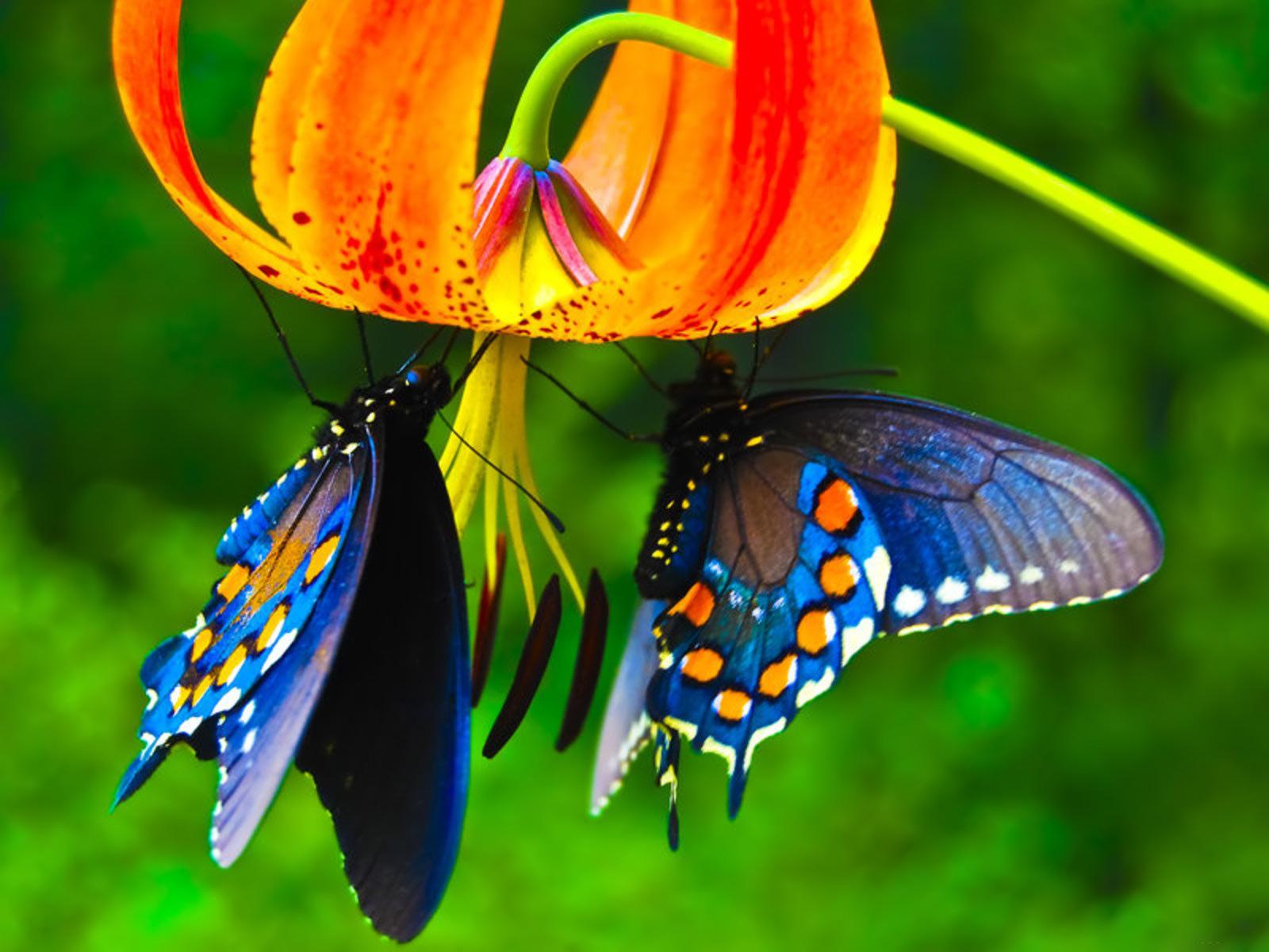 Butterfly HD wallpaper 1600x1200 6438 1600x1200