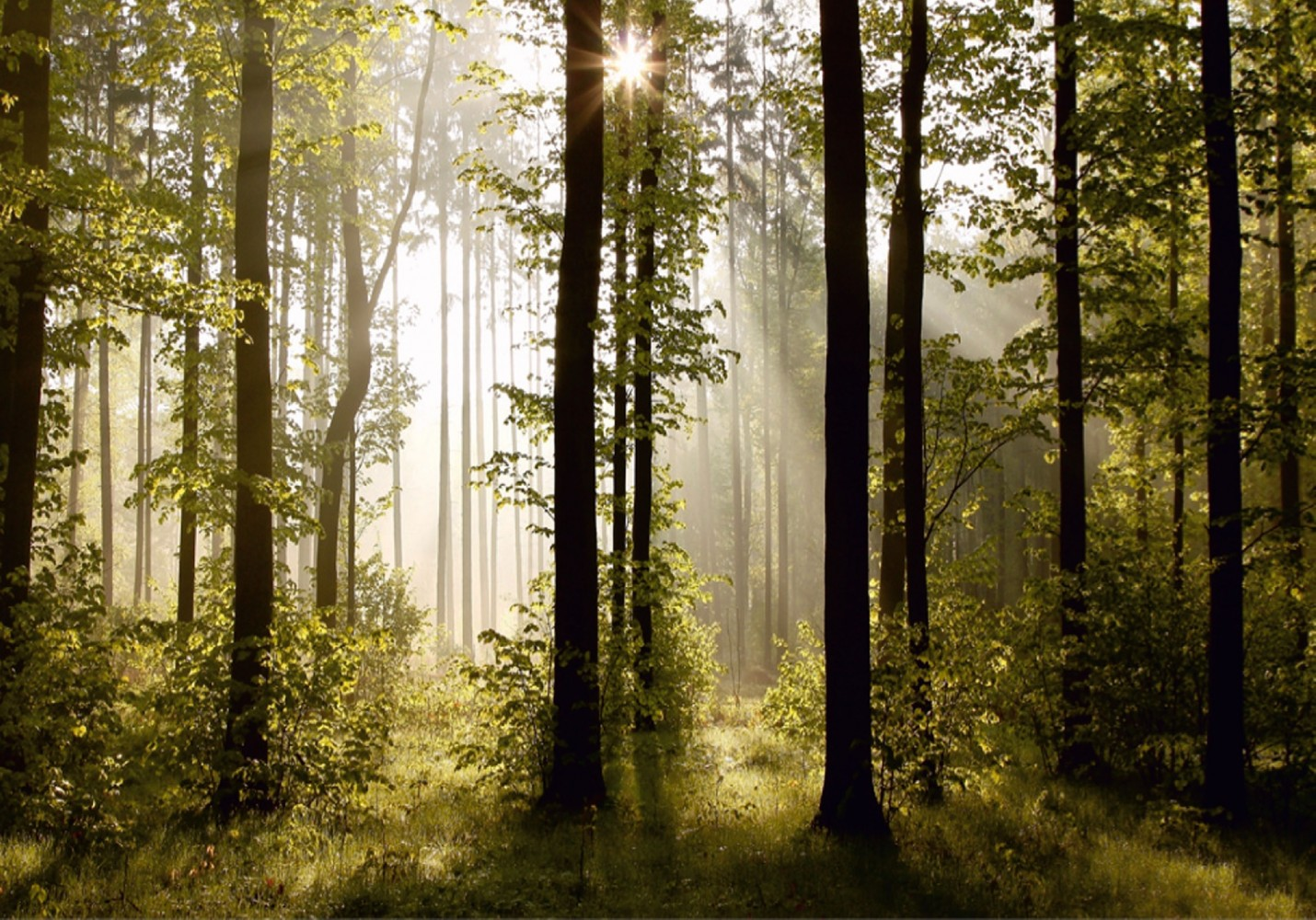 Wall mural wallpaper nature forest tree light show photo 360 cm x 254 1430x1000