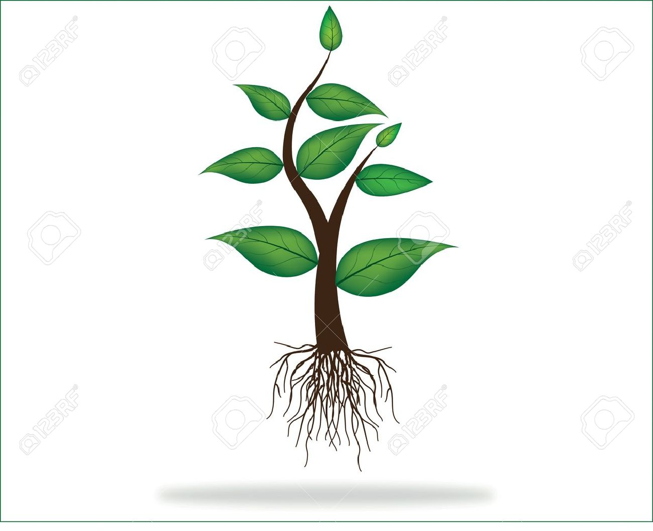 Illustration Of Plant Sapling With Roots Growing On Abstract 1300x1057