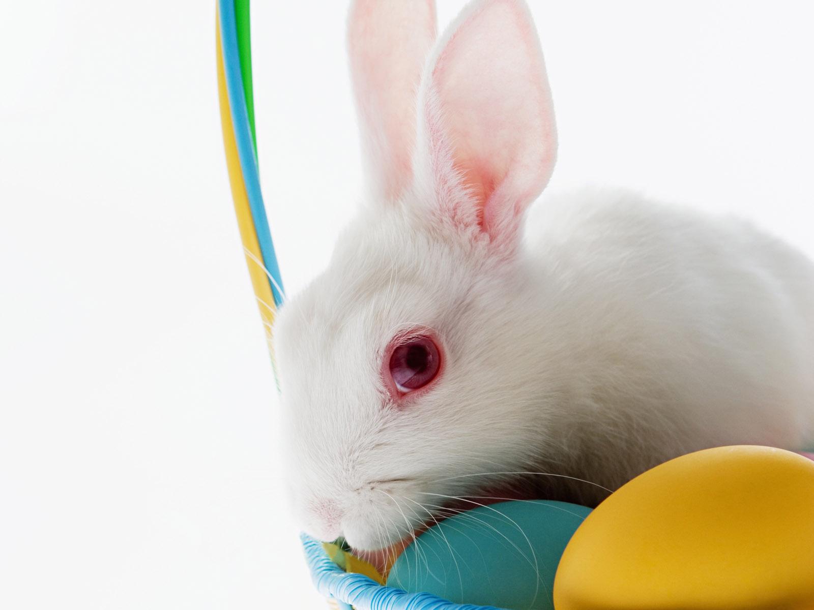 Cute Bunny Rabbit Easter Wallpapers for Desktop Christian 1600x1200