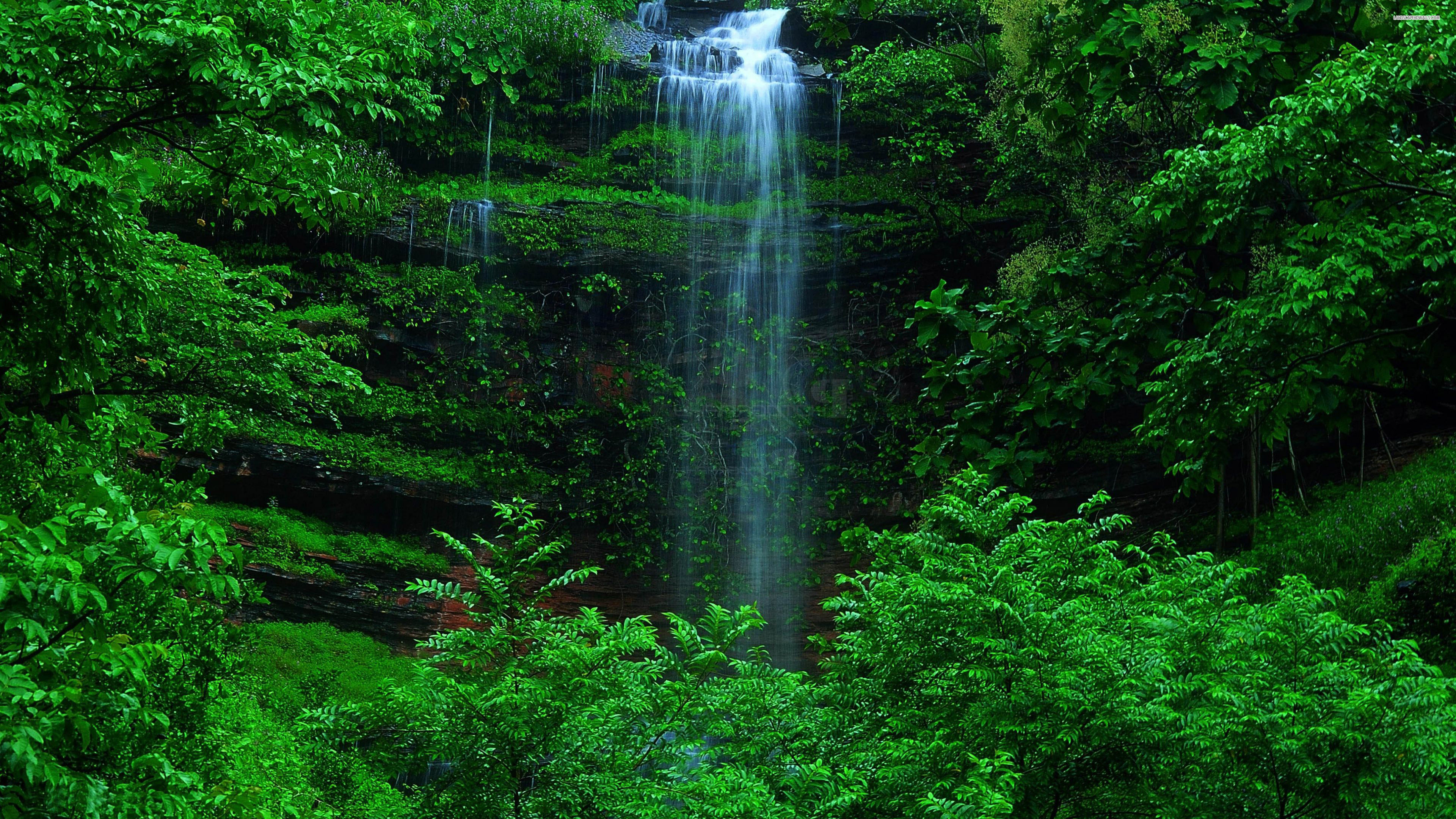 Wallpaper Green Forest 3840x2160