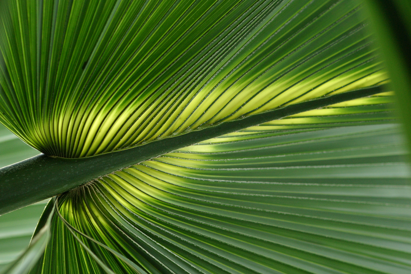 Tropical Leaf Desktop and mobile wallpaper Wallippo 1440x960
