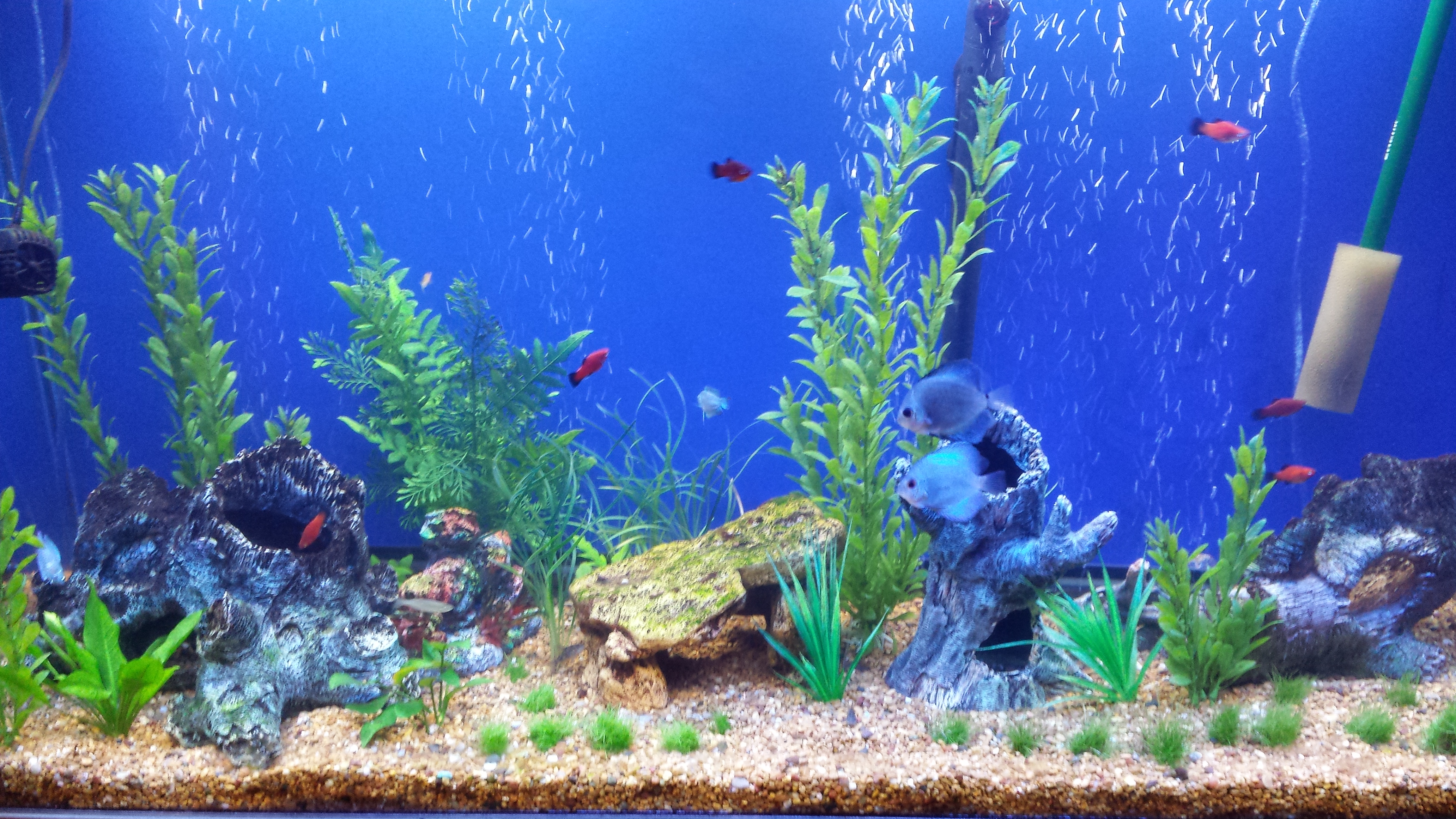 Fish tank wallpaper wallpapersafari for Fish tank background ideas
