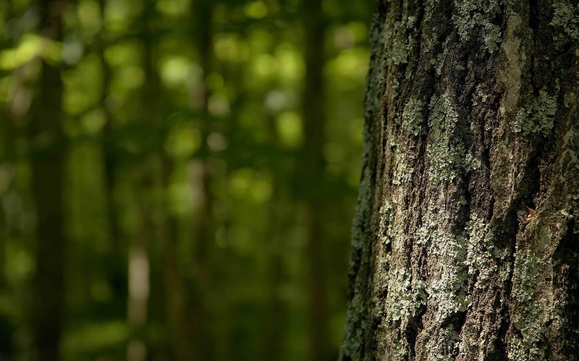 Tree bark wallpaper 1182 1920x1200