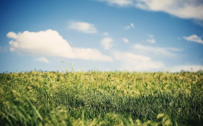 High resolution image of nature desktop wallpaper of fields field 690x431
