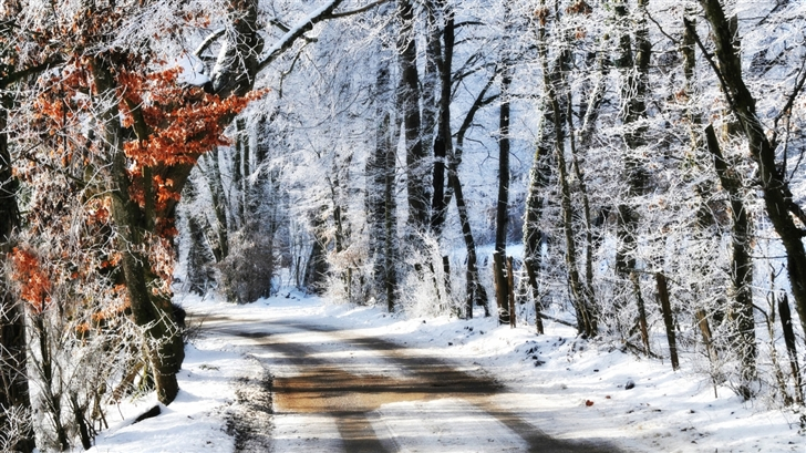 Winter Morning Mac Wallpaper Download Mac Wallpapers Download 728x409