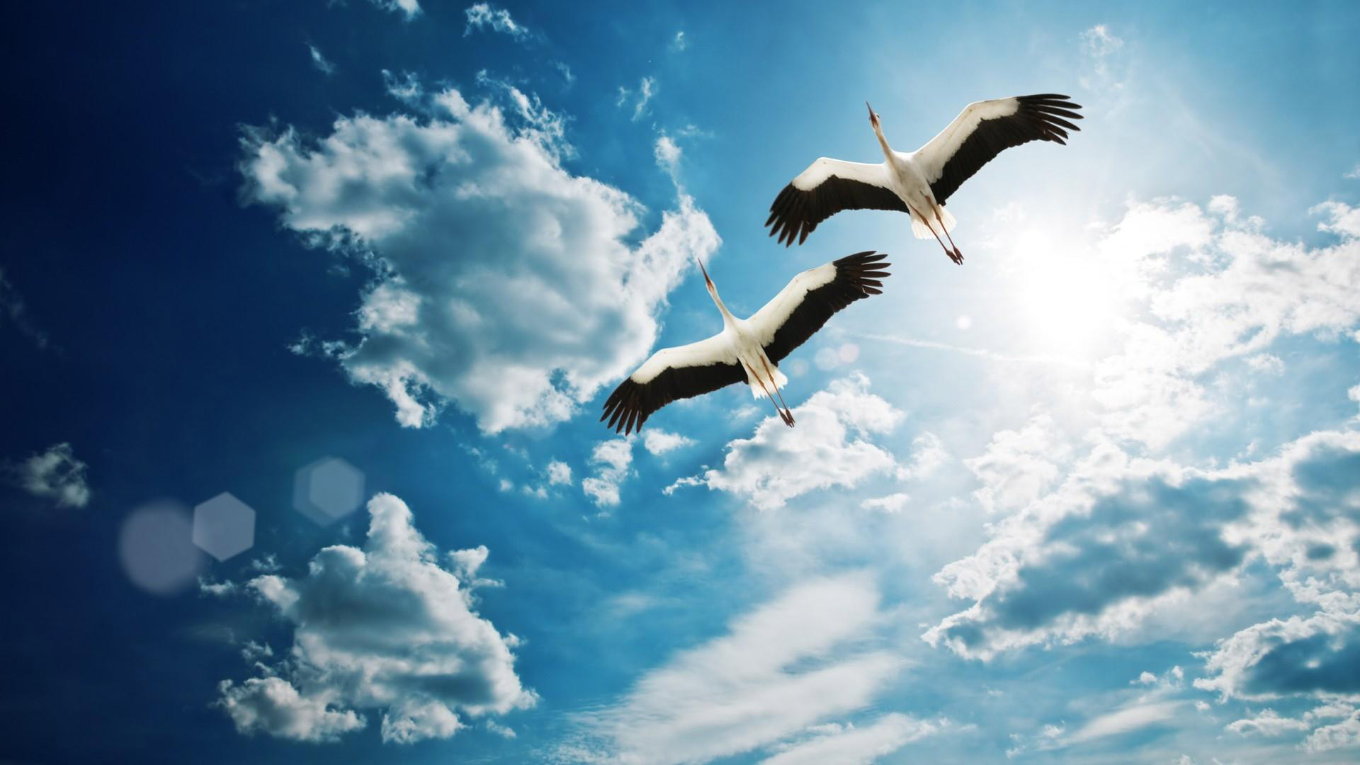 hd wallpaper birds flying 19201080 wallpaper wallpapers55com 1920x1080