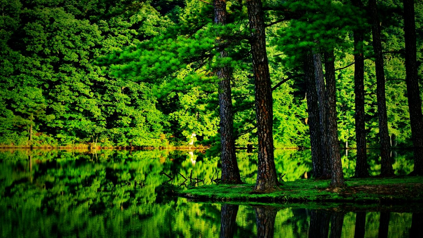 Green Forest Image 1869   HDWPro 1366x768