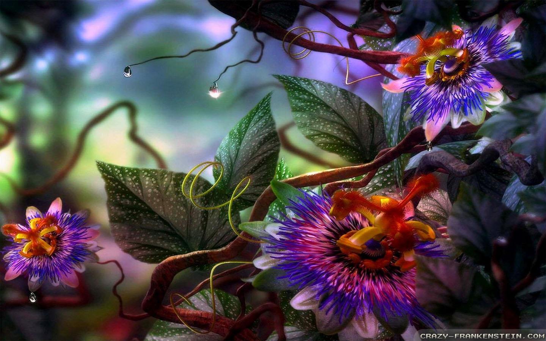 Summer Flowers Orchidea 1440x900
