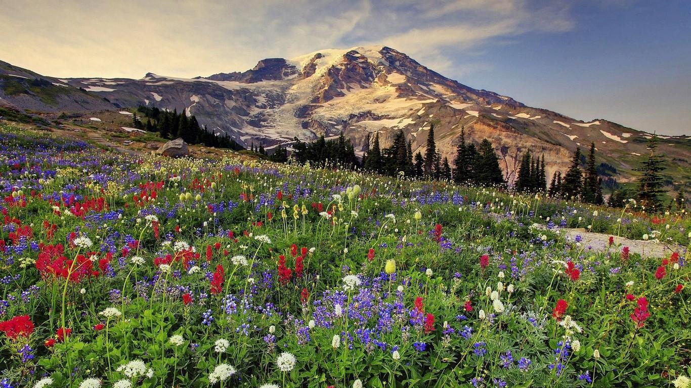 Download Mount Rainier National Park wallpaper 1366x768