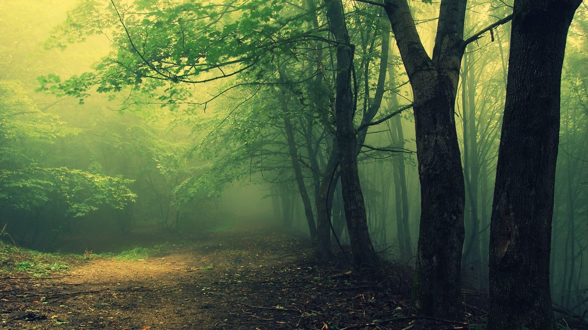 Hoia Baciu Woods Wallpapers Haunted Romanian Forest 4334871206 1920x1080