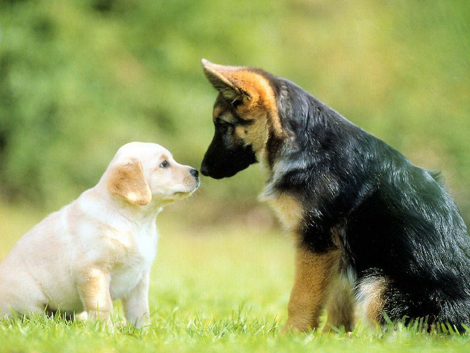 dogs care and affection amongst dogs love contrast cute dogs dogs in 1600x1200