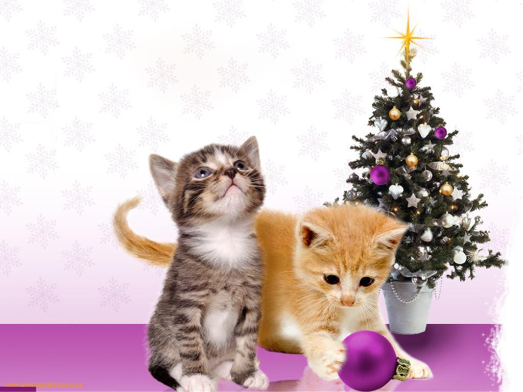 Christmas kittens wallpaper   ForWallpapercom 1024x768