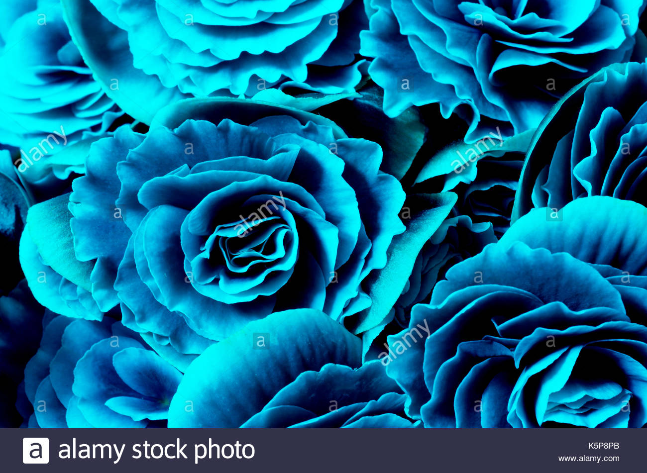 Flower background blue begonias symbol of love and desire for 1300x951
