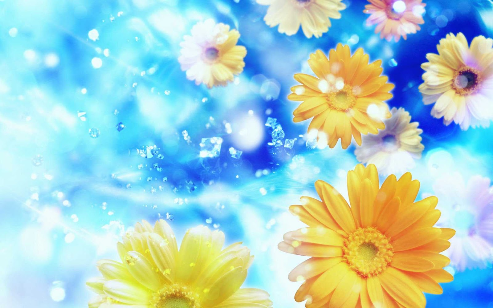Free Download Blue Background Yellow Flowers Hd Wallpapers Yellow