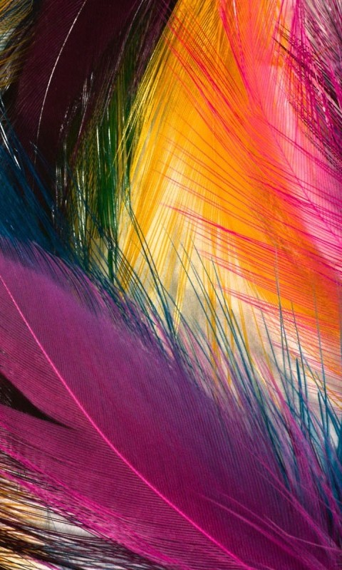 Cool Color Feathers Cell Phone Wallpapers 480x800 Hd Wallpaper For 480x800