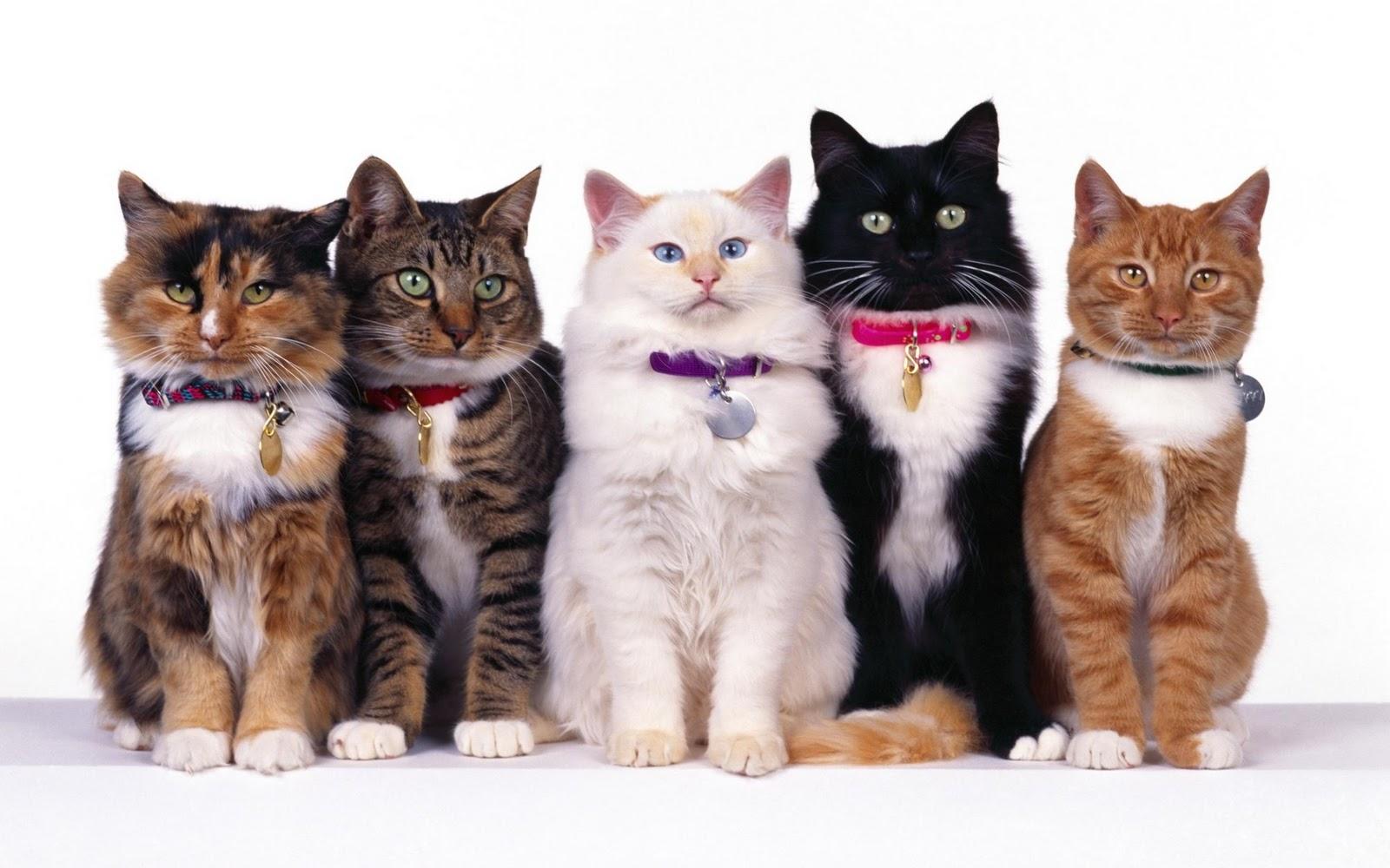 Comel giler group kucing ini Rasa macam hendak bela semua sekali jek 1600x1000