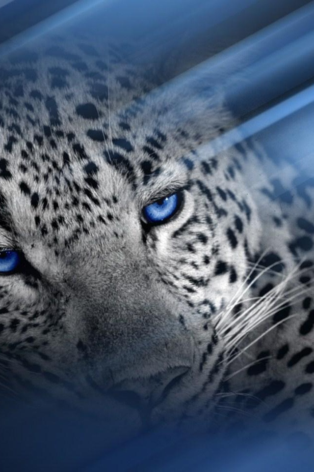 Blue Cheetah Wallpaper - WallpaperSafari Abstract Desktop Backgrounds Black And White