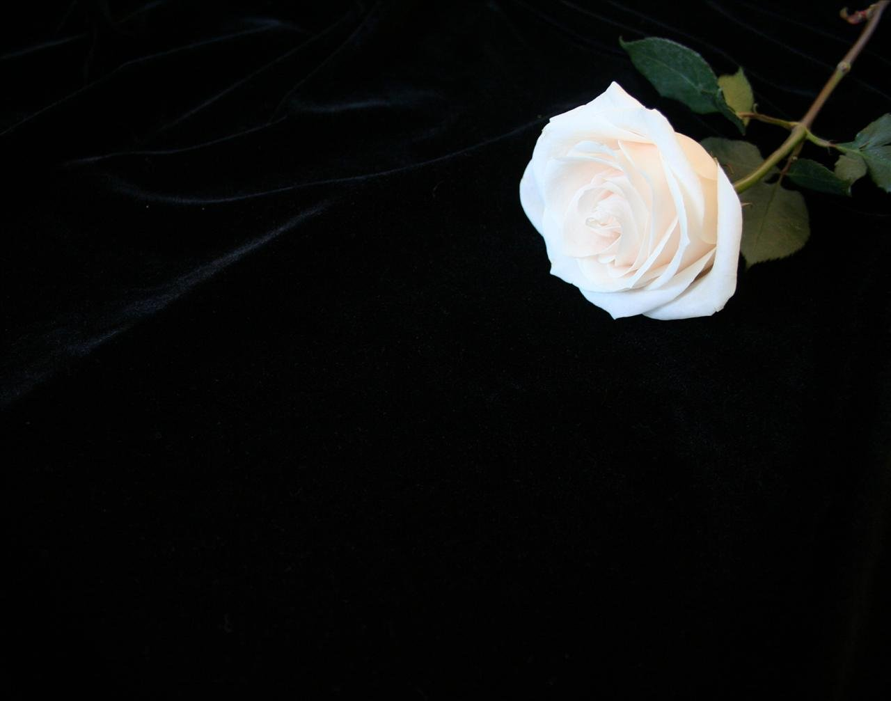 48 Black Background Wallpaper With Flowers On Wallpapersafari