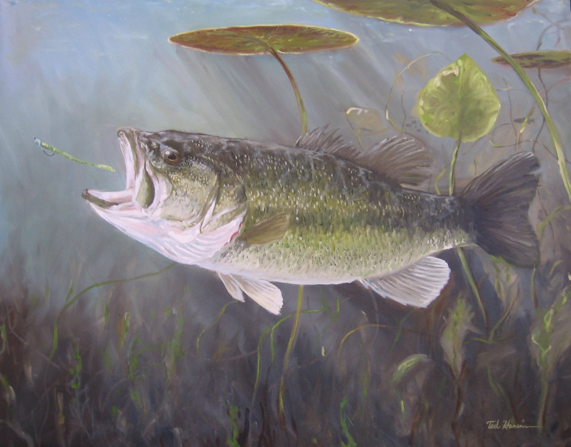 Free Download Largemouth Bass Painting Fine Art Fine Fishing 1897x1484 For Your Desktop Mobile Tablet Explore 49 Big Bass Wallpaper Black Bass Wallpaper Bass Boat Wallpaper For Computer Bass