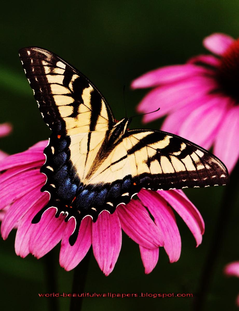 Beautiful Wallpapers Beautiful Butterflies Wallpaper 921x1194