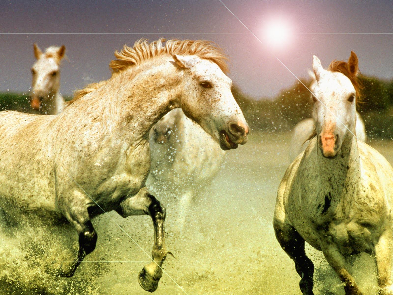 Free Download Windows 7 Thoroughbred Horse Hd Wallpaper High