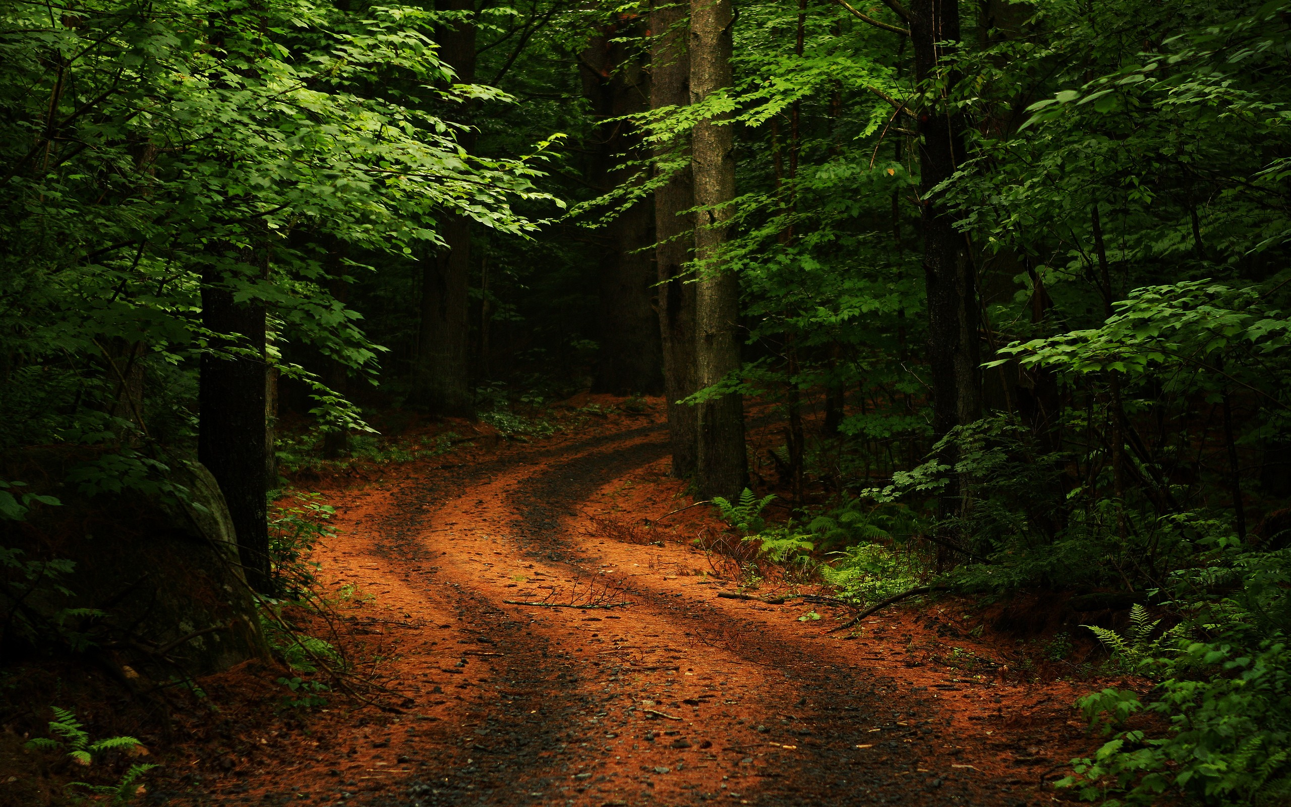 Forest Road - Best Nature Wallpapers