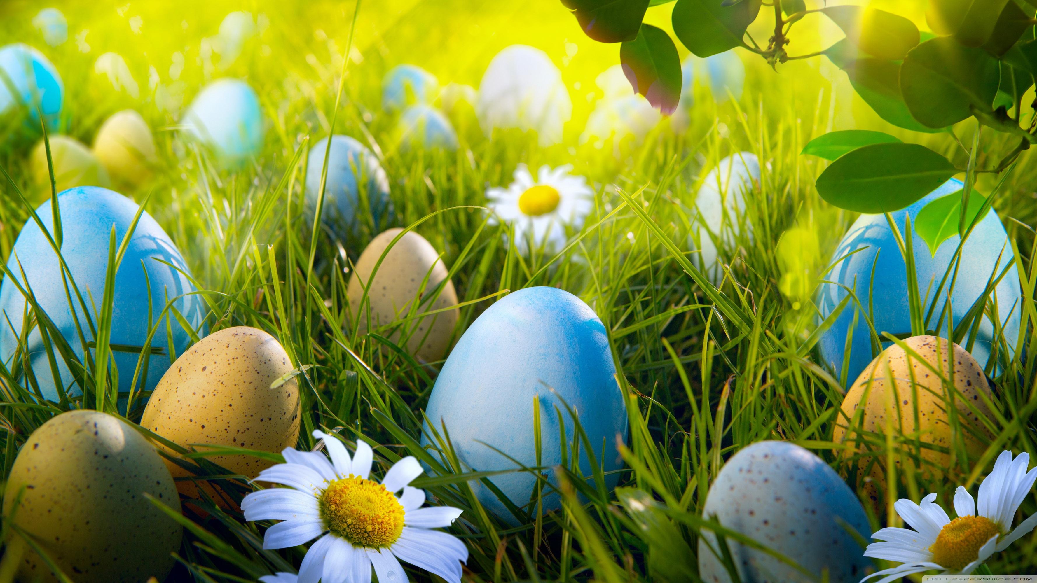 Desktop Wallpaper Easter Eggs 200258   Easter Background 3554x1999