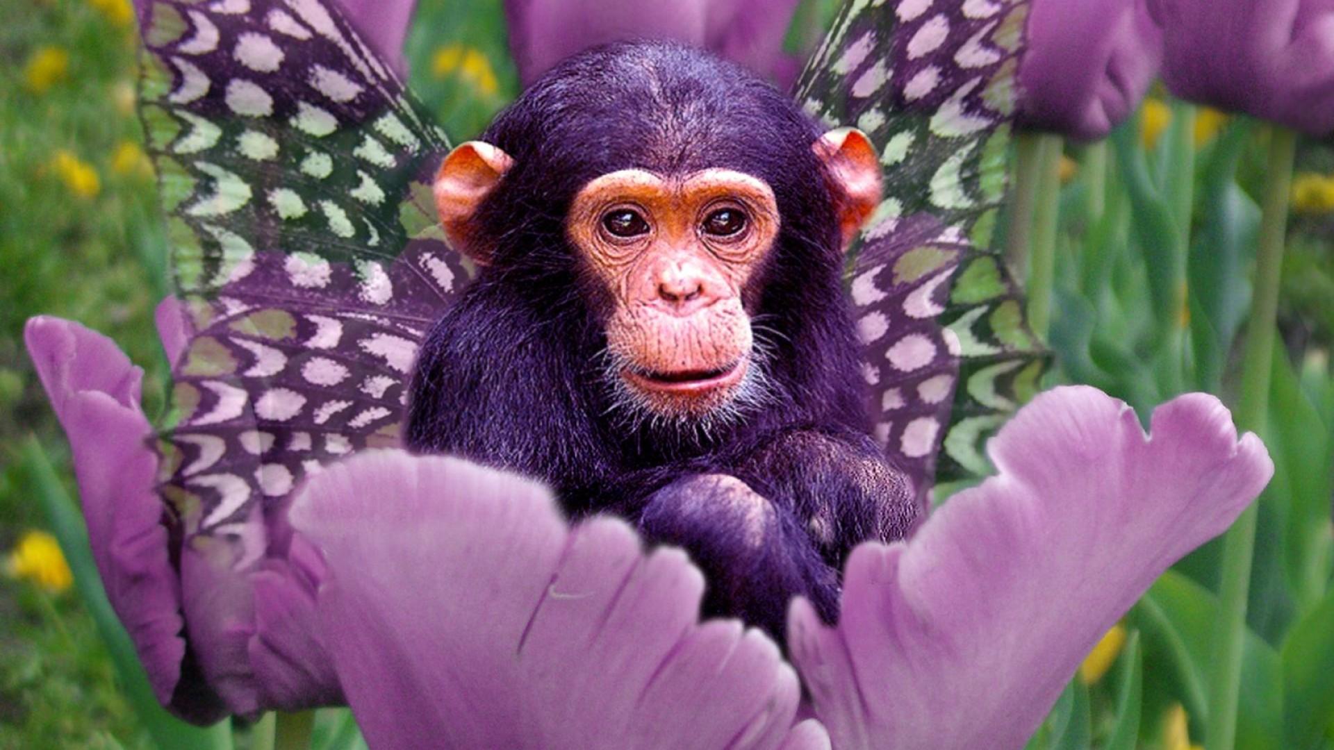 Orangutan Cartoon Cute Monkey Background...