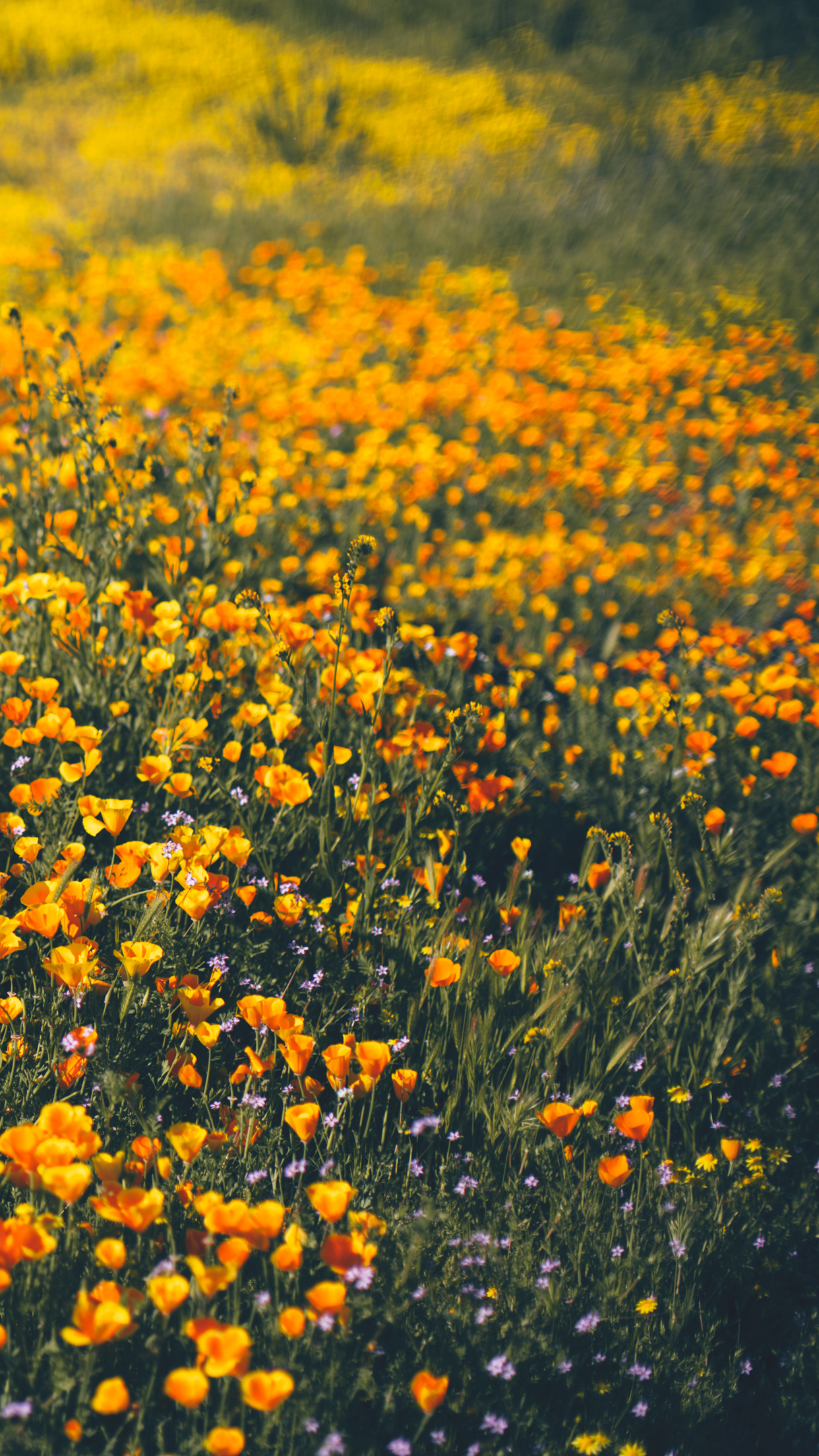Wallpapers of the Month Spring Wildflowers 1242x2208