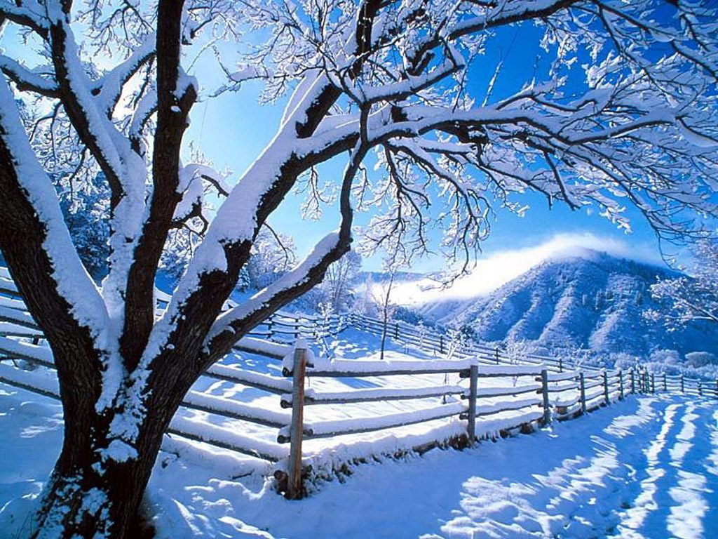 free winter scene wallpaper which is under the winter wallpapers 1024x768
