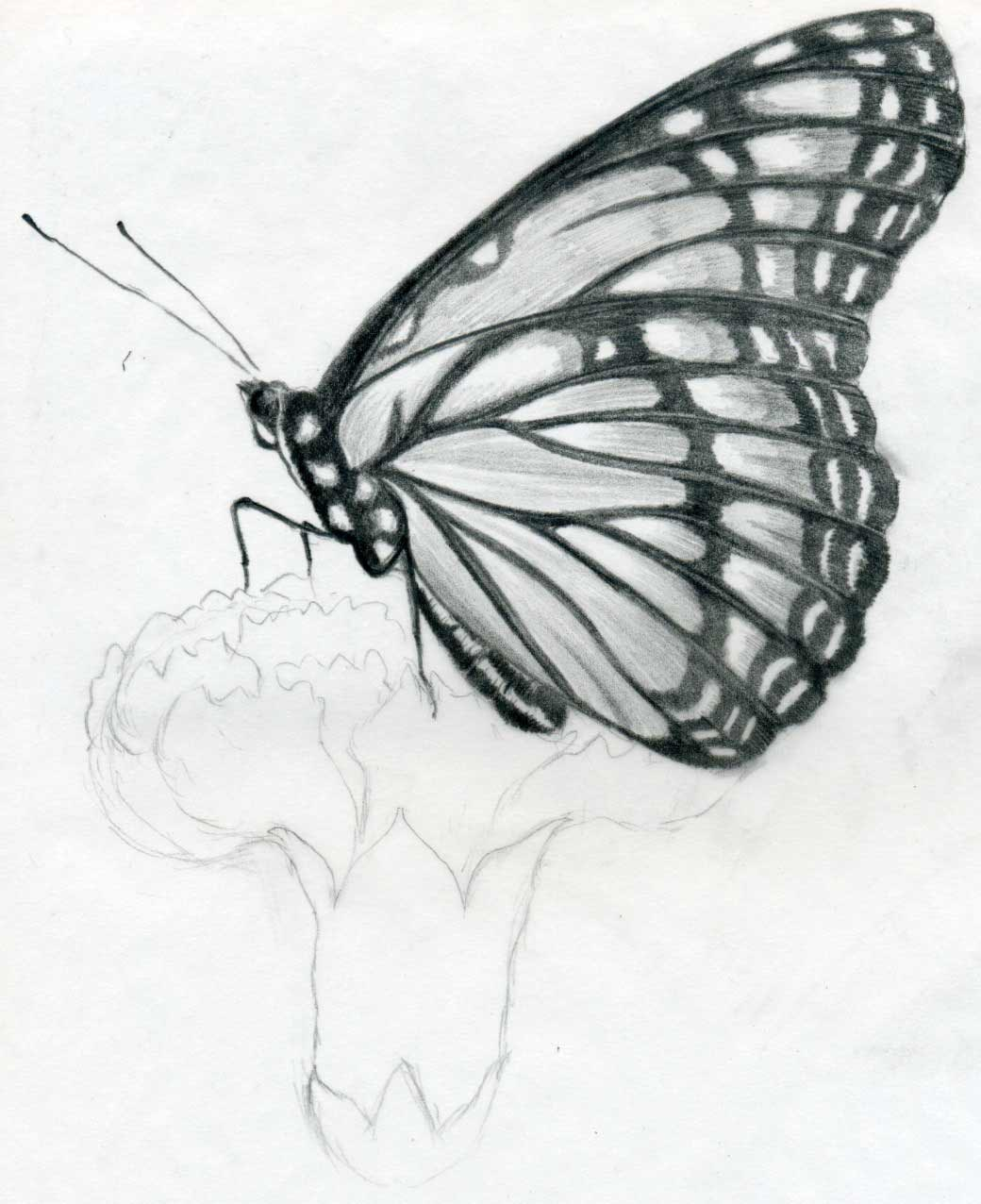 Pencil drawing butterfly sketches wallpapers cute birds sketches 1040x1276